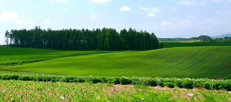 оценка земли для изменения кадастровой стоимости