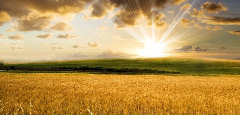 что такое пай сельхозназначения