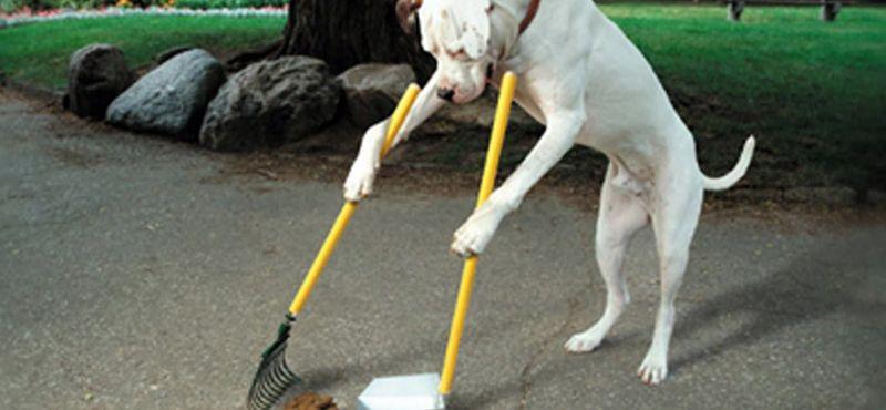 нарушение правил содержания домашних животных коап